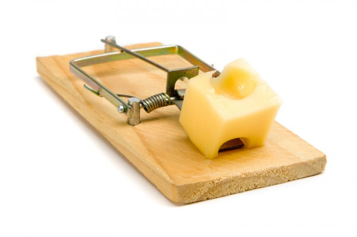 mouse trap OnPath - Blog - Home